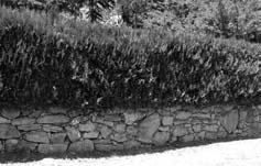 Labeaume - mur avec haie